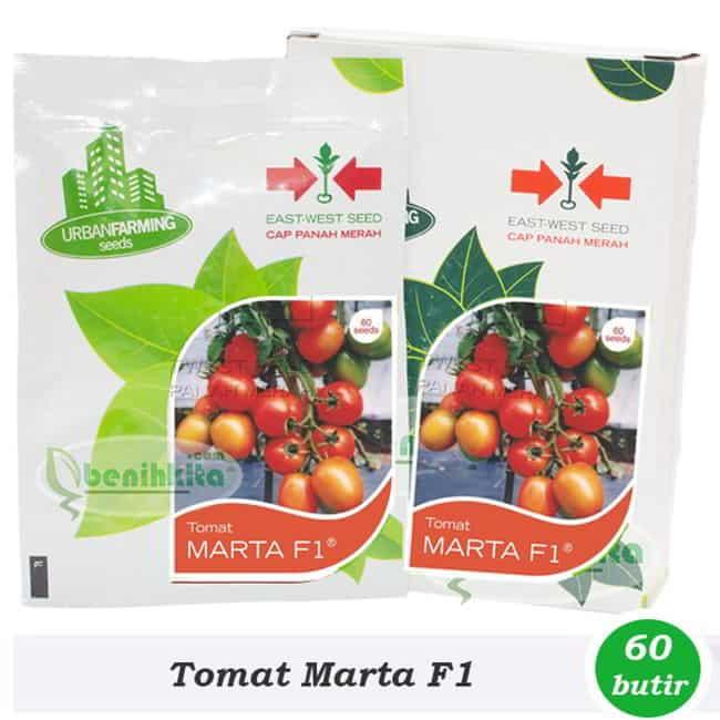 bibit tomat hidroponik