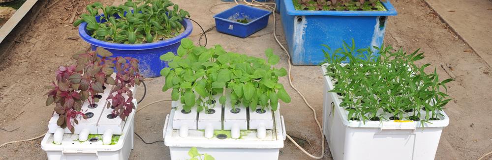 Memilih sistem hidroponik yang cocok untuk tanaman sayuran anda