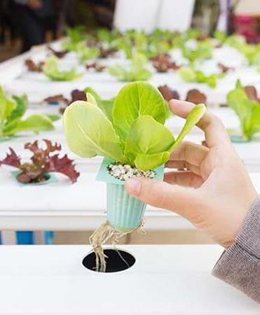 cara menanam hidroponik di netpot