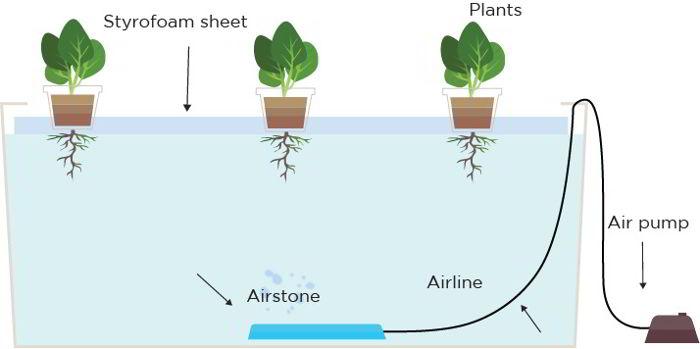 sistem hidroponik floating
