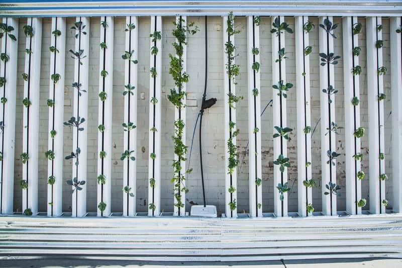 hydroponics 917285 1280
