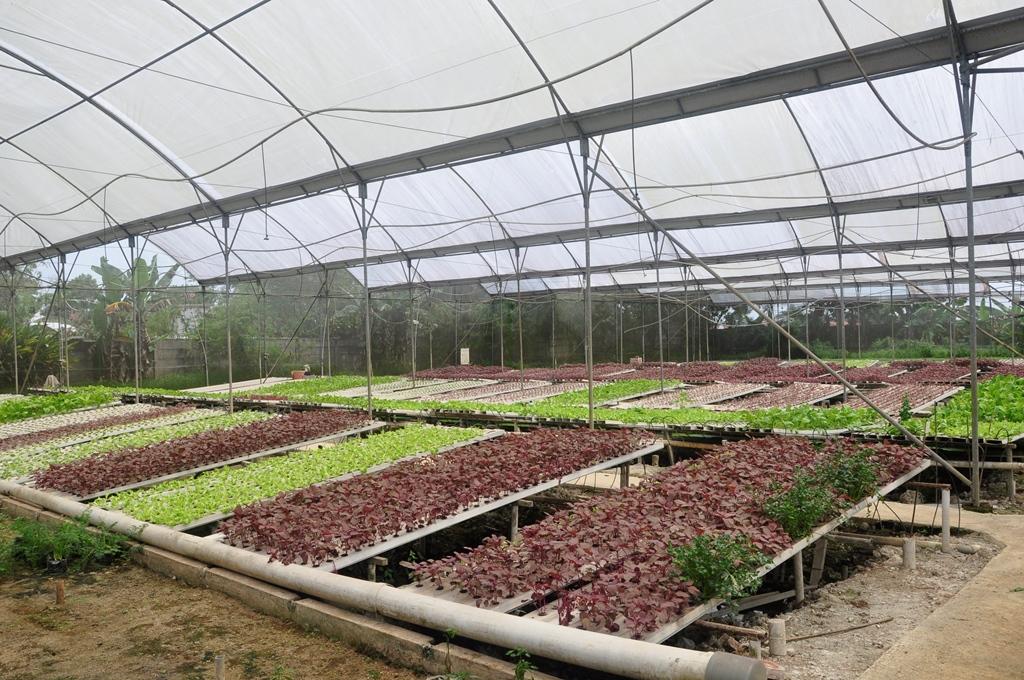 kebun Jirifarm