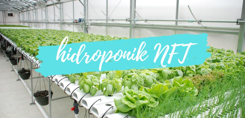 Inilah Kelebihan Hidroponik NFT | Hidroponik Yuk!