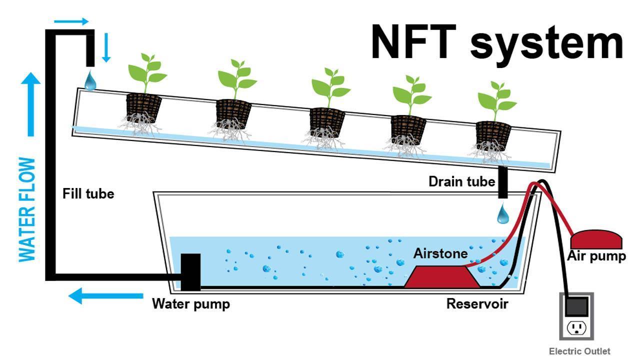hidroponik NFT